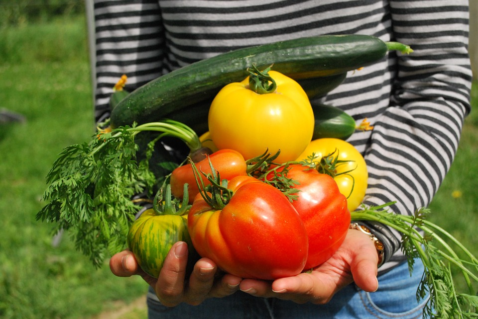 A person holding fresh vegetables in their hands.
